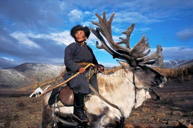 03-mongolian-reindeer