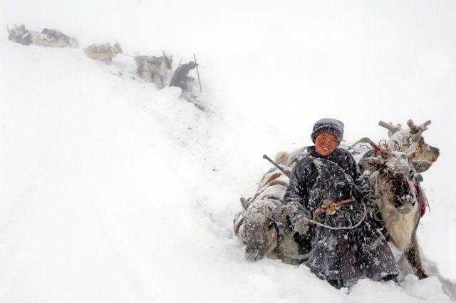 04-mongolian-reindeer