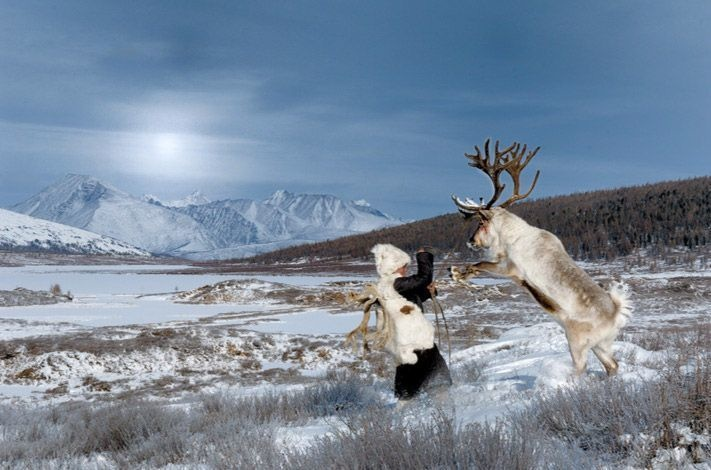 05-mongolian-reindeer
