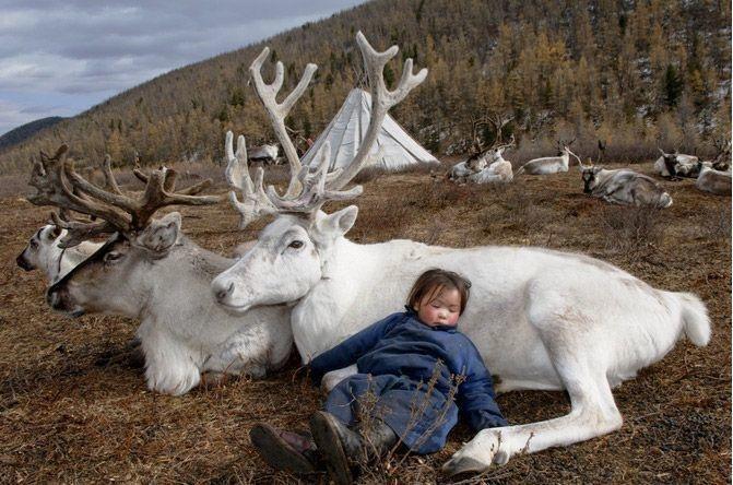 06-mongolian-reindeer