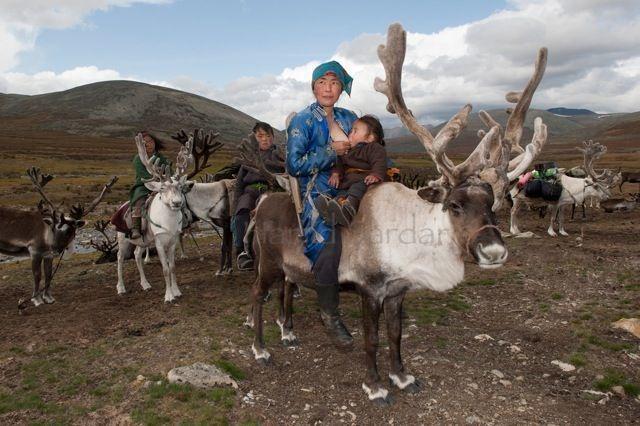 08-mongolian-reindeer