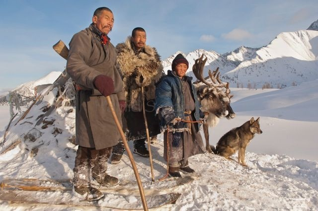 11-mongolian-reindeer