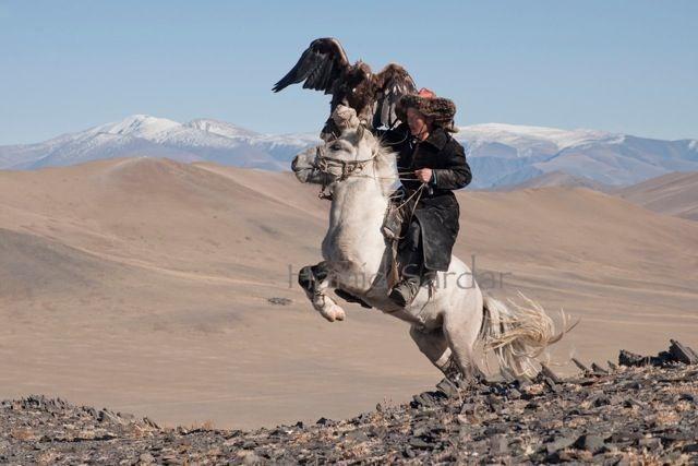 14-mongolian-reindeer