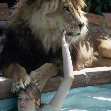 Melanie Griffith in a swimming pool with pet lion Neil.