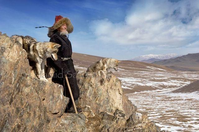 16-mongolian-reindeer