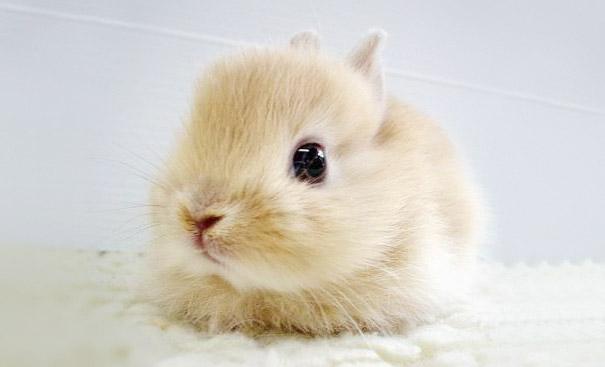cute-bunnies-110__605