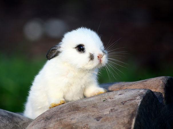 cute-bunnies-116__605