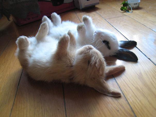 cute-bunnies-28__605