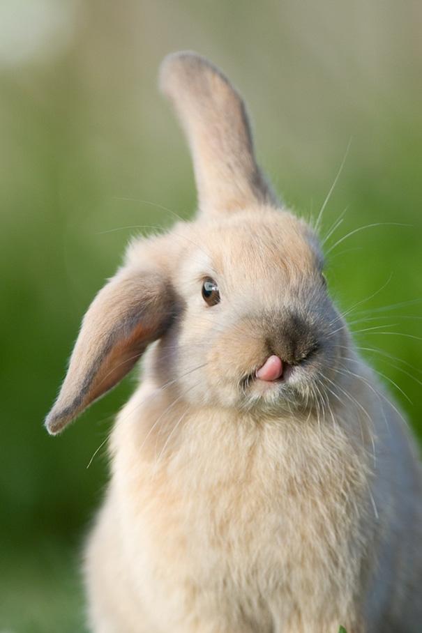 cute-bunnies-48__605