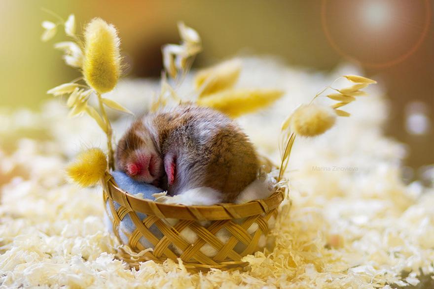 cute-hamsters-29__880