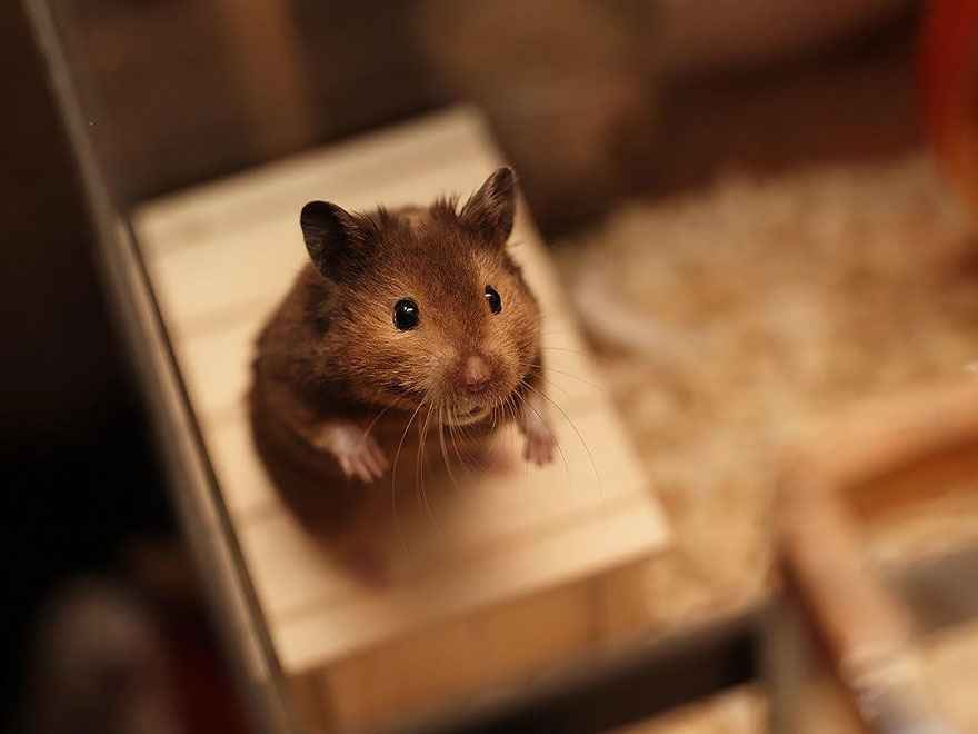 cute-hamsters-2__880