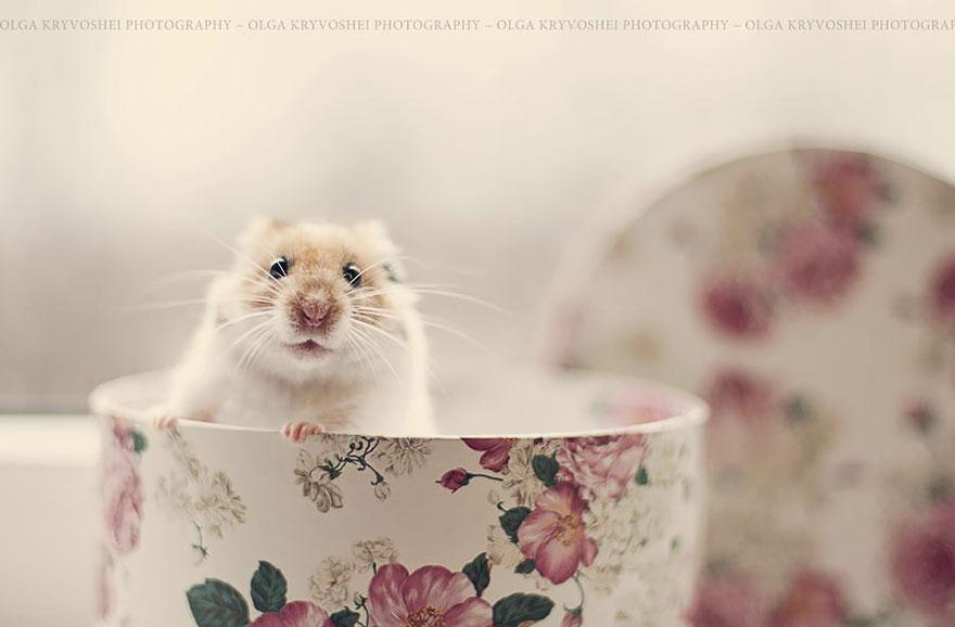 cute-hamsters-3__880