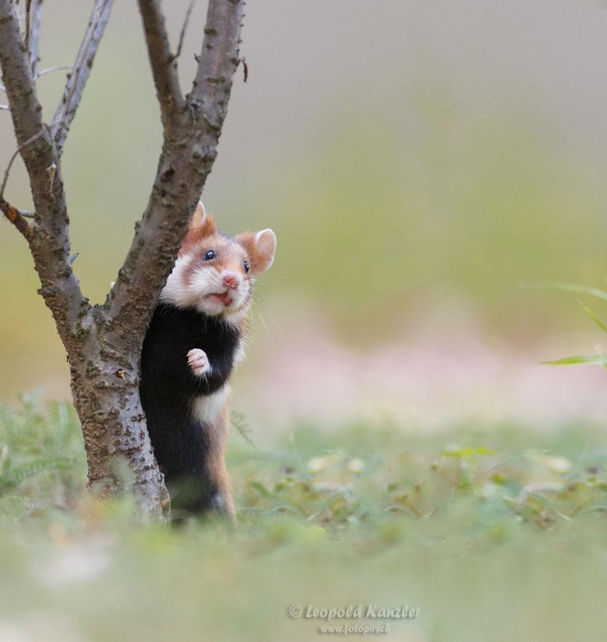 cute-hamsters-56__880