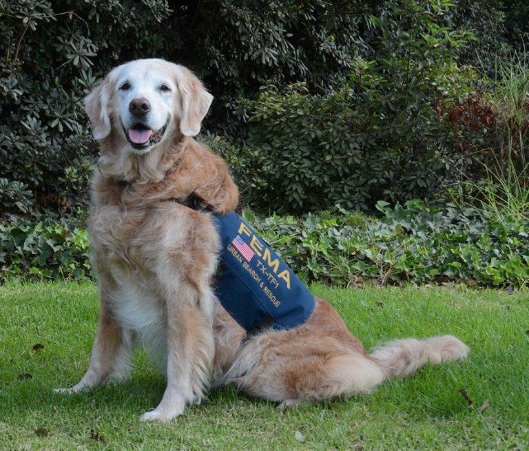 Meet Bretagne, a 16-year-old search-and-rescue Golden Retriever who became a hero after 9/11