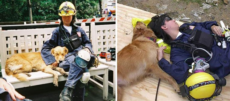 Bretagne even worked as a therapy dog – once, she even disobeyed her handler's orders and comforted a distressed firefighter at ground zero