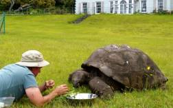 """""""He lives in the grounds of Plantation House, which is the governor's residence, with five other tortoises who are much younger than him."""""""