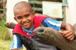 According to BBC, giant tortoises like Jonathan can live to be 250 years old! While Jonathan may certainly continue to outlive plenty of the island's inhabitants, the community does have plans in store in the event of Jonathan's eventual passing. His shell will be preserved and put on display so that all may honor him.