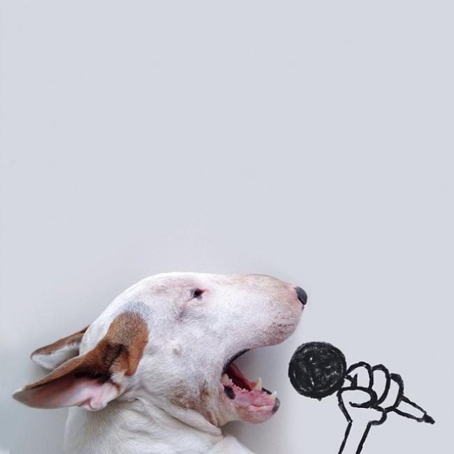 214805-R3L8T8D-650-jimmy-choo-bull-terrier-illustrations-rafael-mantesso-1