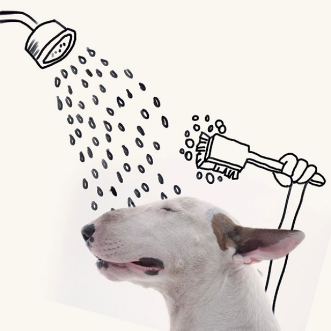 215405-R3L8T8D-650-Jimmy-the-Bull-Terrier20__605