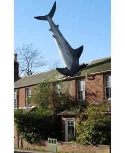 The Shark became the most famous resident of Headington when it landed in the roof of 2 New High Street (see map) on 9 August 1986.This ordinary home (built as a semi-detached house in about 1860 but now attached by a link to a second house to the north) suddenly became the centre of world attention, and the headless shark still excites interest today. Location: New High Street, Headington, Oxford