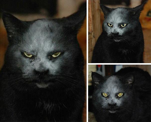 demon-cat-kitchen-accident-4