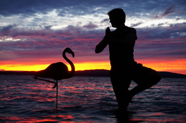 Flamingo__880