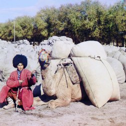 ca. 1907-1915 Wearing traditional dress and headgear, a Turkmen camel driver poses with his camel, laden with what is most likely grain or cotton. Camel caravans remained the most common means of transporting food, raw materials and manufactured goods in Central Asia well into the railroad era. IMAGE: PROKUDIN-GORSKII / LIBRARY OF CONGRESS>